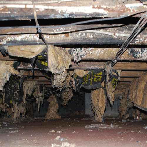 hidden mold in crawl space